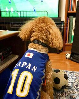 サッカー日本代表選手を応援する犬。の写真・画像素材[1733808]