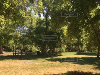 公園の木の写真・画像素材[1667743]