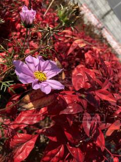 近くの花のアップの写真・画像素材[1687511]