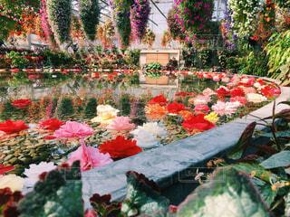 カラフルなフラワー ガーデンの写真・画像素材[1668335]
