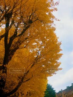 近くの木のアップの写真・画像素材[1669093]