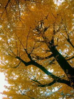 近くの木のアップの写真・画像素材[1669101]