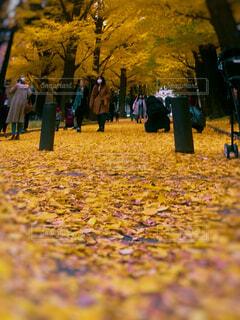草の中に立っている人々 のグループの写真・画像素材[1669104]