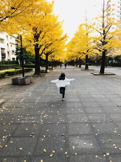 いちょう通り★自由に走っている子供の写真・画像素材[1668010]