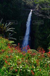 森の中の大きな滝の写真・画像素材[1670656]