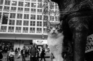 建物の前に立っている黒い猫の写真・画像素材[1674678]