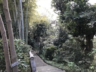 森浅間神社の参道の写真・画像素材[1669843]