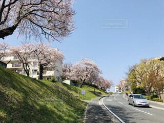 春の訪れの写真・画像素材[1670568]