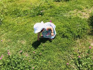 シロツメグサのお花摘みの写真・画像素材[1671859]