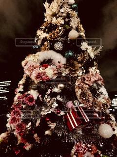 クリスマスツリーの写真・画像素材[1673557]