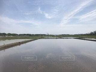 田植え前の水田の写真・画像素材[2231388]