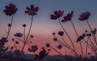 Pink butterflyの写真・画像素材[1692451]