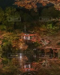 醍醐寺ライトアップの写真・画像素材[1692459]