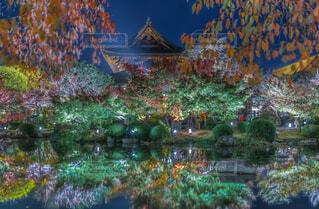 東寺ライトアップの写真・画像素材[1692463]