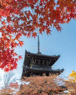 真如堂の秋の写真・画像素材[1692478]