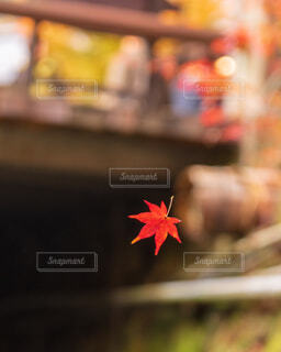 小さな秋の写真・画像素材[1693054]