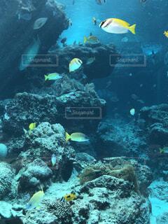 水の中の魚の群れの写真・画像素材[1669810]