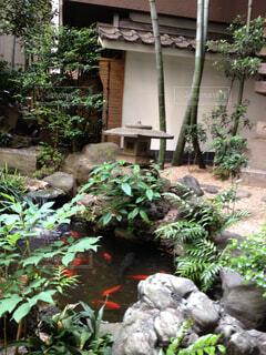 日本庭園(鯉付き)の写真・画像素材[1673068]