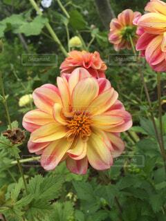 花の写真・画像素材[1675533]