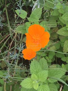 花の写真・画像素材[1675536]