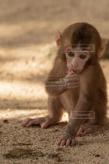 子猿の写真・画像素材[1669994]