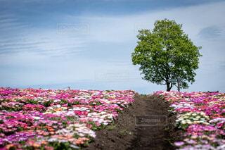 花の小道の写真・画像素材[2114192]
