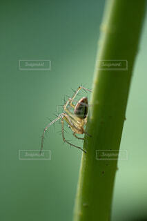 蜘蛛の写真・画像素材[2229536]