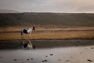 草千里の馬の写真・画像素材[2752182]