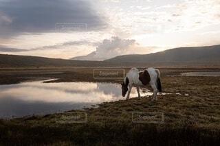 草千里の馬の写真・画像素材[2752183]