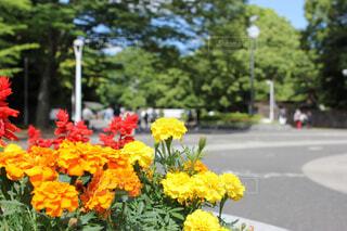 代々木公園の写真・画像素材[1698910]