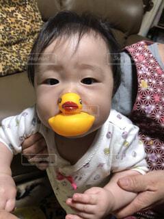 アヒルをくわえる赤ちゃんの写真・画像素材[4175587]