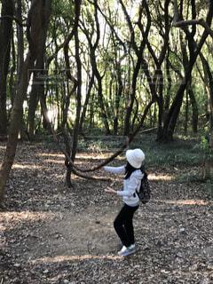 どこかの森林公園の写真・画像素材[1673636]