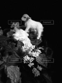 子ヤギさんと花の写真・画像素材[1676303]