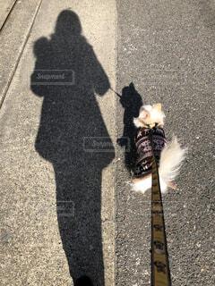 散歩中♬の写真・画像素材[1779237]