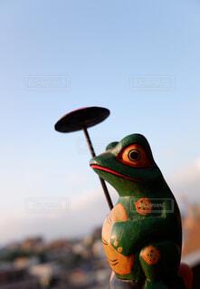 蛙のポートレートの写真・画像素材[2428153]