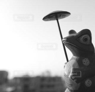 モノクロ蛙の写真・画像素材[2428155]