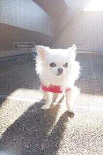 愛犬の写真・画像素材[3977429]