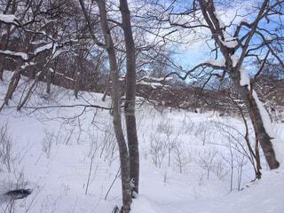 雪に覆われた木の写真・画像素材[1708713]