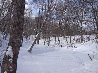 雪に覆われた森をスキーに乗る男の写真・画像素材[1723859]