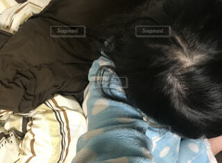 ベッドの上で眠っている猫の写真・画像素材[1881206]