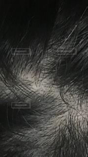 鳥のクローズアップの写真・画像素材[3610009]