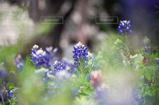アメリカの公園の花の写真・画像素材[2913660]