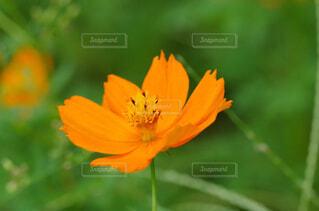 花のクローズアップの写真・画像素材[2913790]