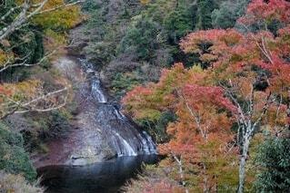 養老渓谷の滝と紅葉の写真・画像素材[3995628]