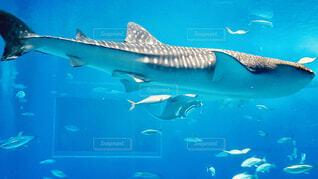 美ら海水族館の写真・画像素材[1675002]
