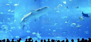 美ら海水族館の写真・画像素材[1675003]