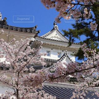 城と桜の写真・画像素材[1672330]
