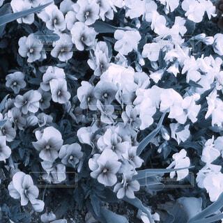 花のアップの写真・画像素材[1673341]