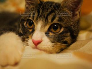 猫の写真・画像素材[1675700]