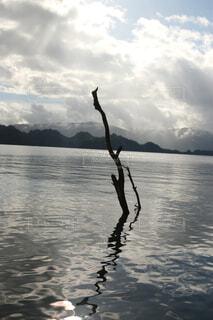 十和田湖の写真・画像素材[1678899]